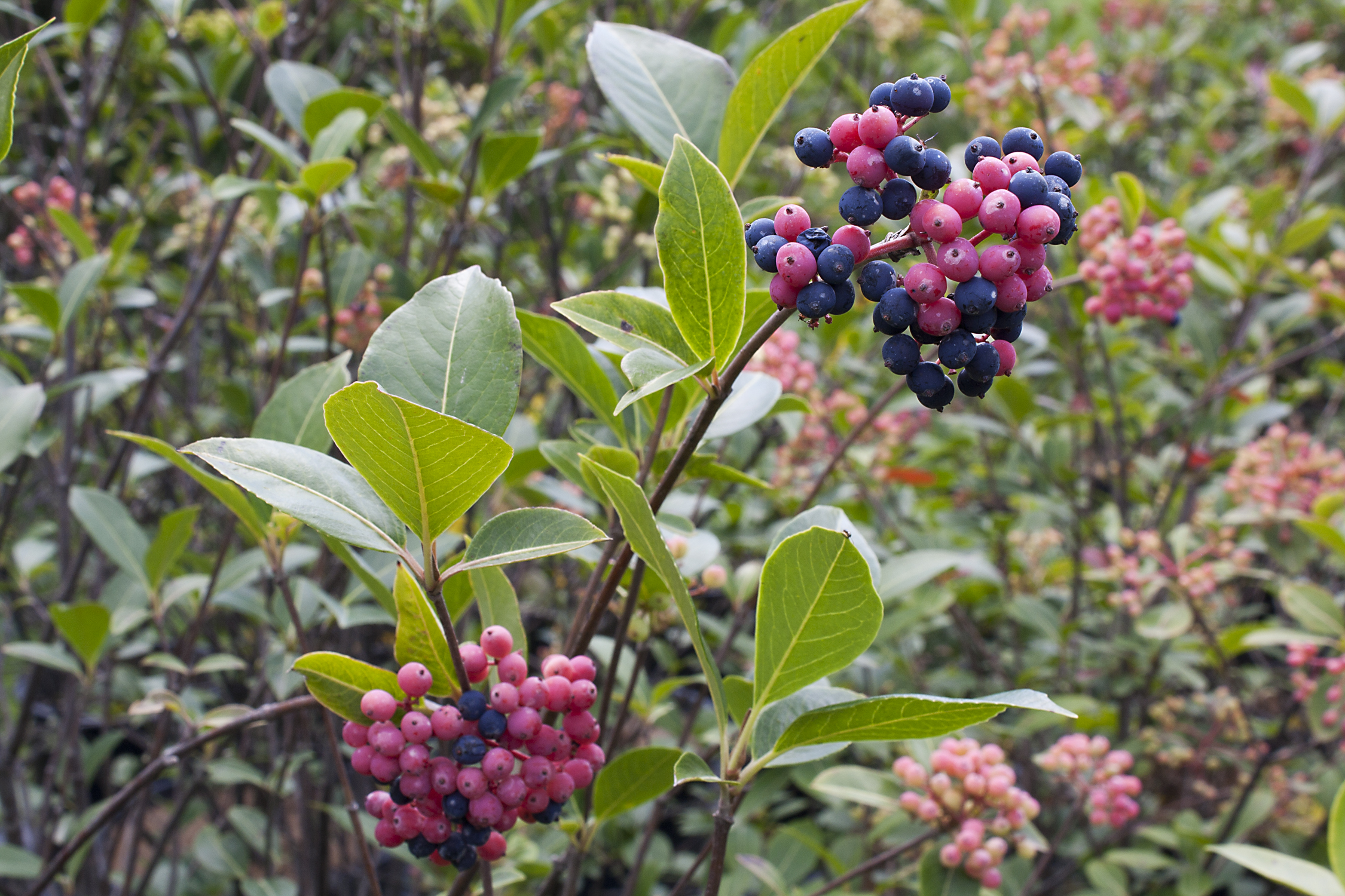Top 10 reasons to plant native trees and shrubs ontario for Plants and shrubs