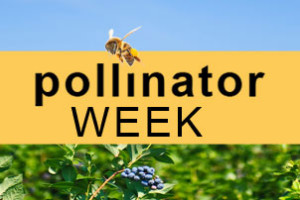 National Pollinator Week, 2014
