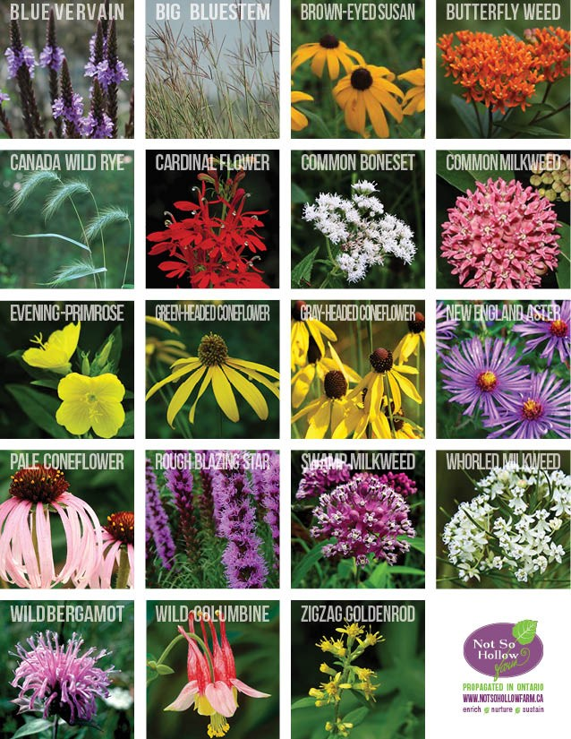 PLANT DIRECTORY