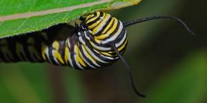 caterpillar-562094