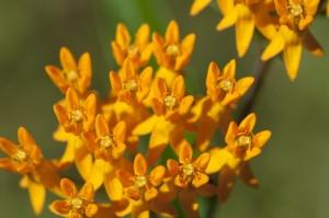 flower-1043105_1920
