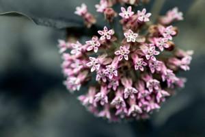 flower-1863845_1920