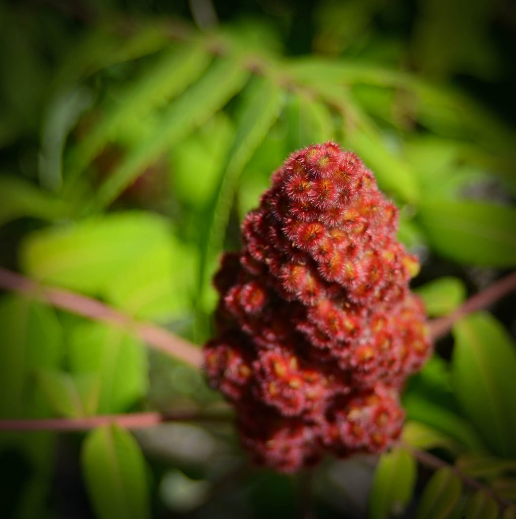 Chickadees, Erosion Control & Herbal Tea